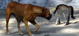 Why dogs hate cats